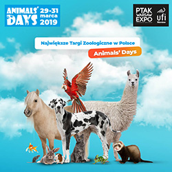 Animals' Days